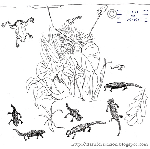 paludarium line drawing