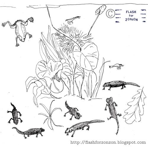 paludarium line drawing