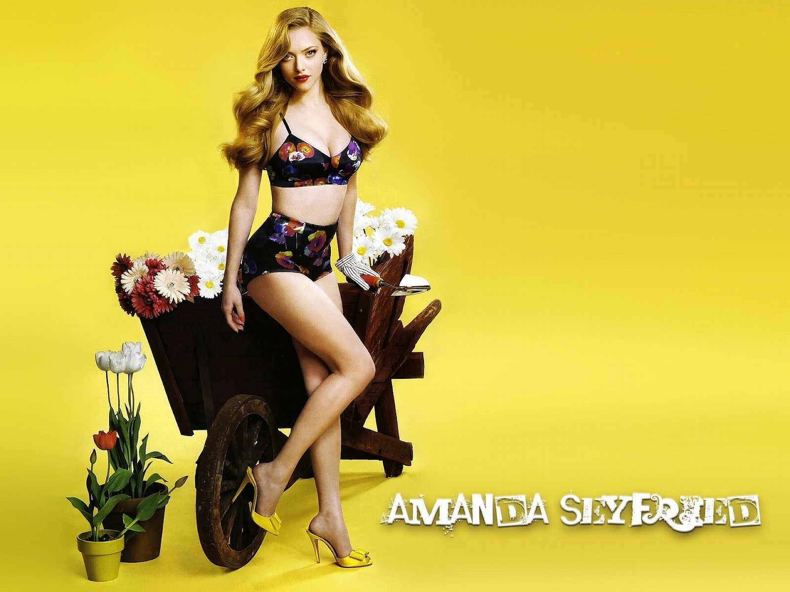 http://2.bp.blogspot.com/-LXChco6vT0E/T0zYGfbiaaI/AAAAAAAAAA4/dGE8Y2OIDSo/s1600/amanda-seyfried-hot-bikini-blonde-heels-wallpaper-hq-hd.jpg