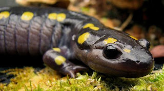 Salamandra-animales-increibles-fotos-video-zoo-planta-dentro-de-animal