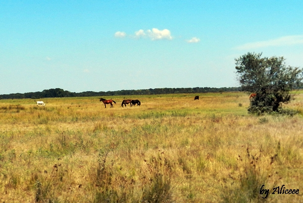 cai-salbatici-satul-letea-delta