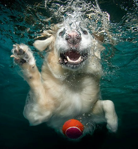 Hilariously Ferocious Underwater Dogs