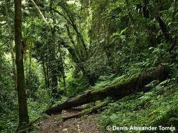 selva tucumana