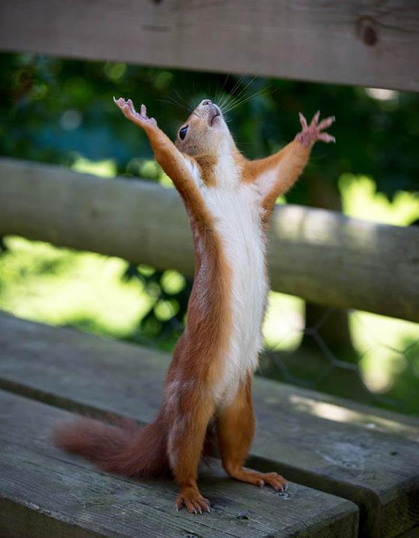 squirrel praying, funny animal pictures of the week