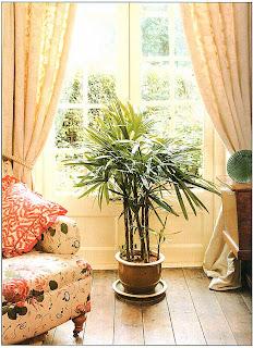 Французское окно или дверь в сад, у которых нет подоконника, требуют перед собой большого напольного экземпляра, который притягивал бы взгляд