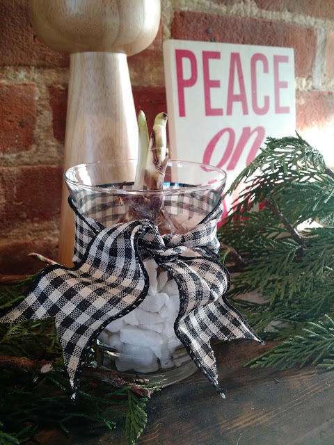 Easy DIY holiday hostess gift with paperwhite narcissus and dollar store finds
