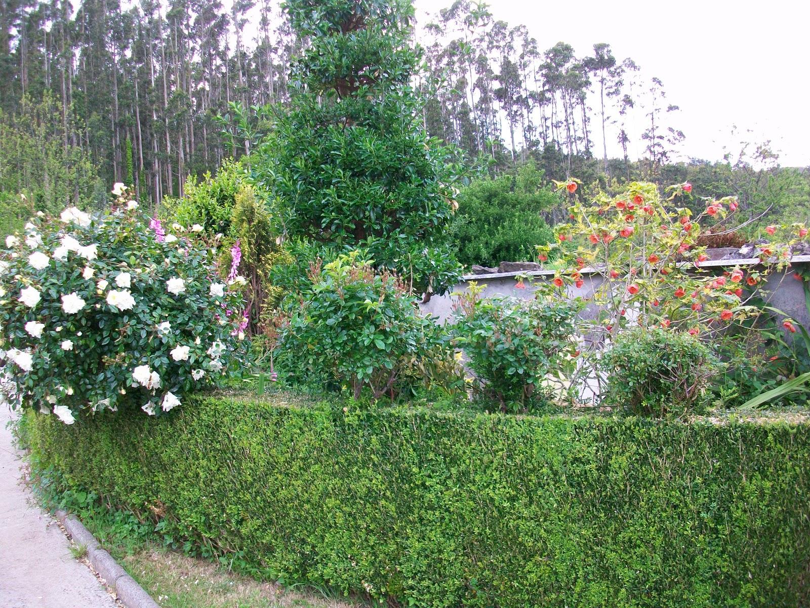 Multiservicios mantenimiento de jardines - Mantenimiento de jardines ...