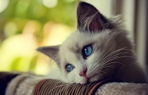 Kucing Imut lagi galau