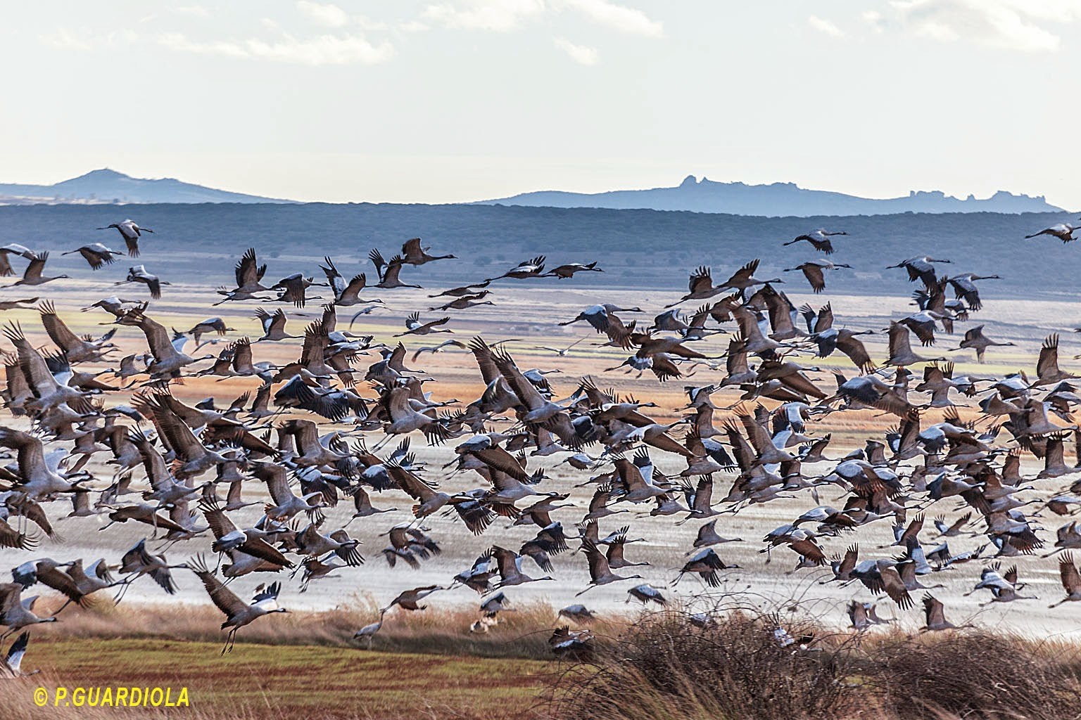 Laguna de Gallocanta 28 de Febrero 2015