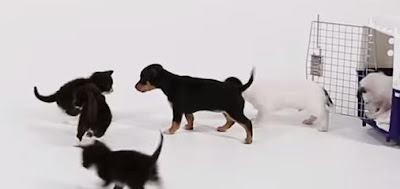 Σκυλάκια και γατάκια συναντιόνται για πρώτη φορά