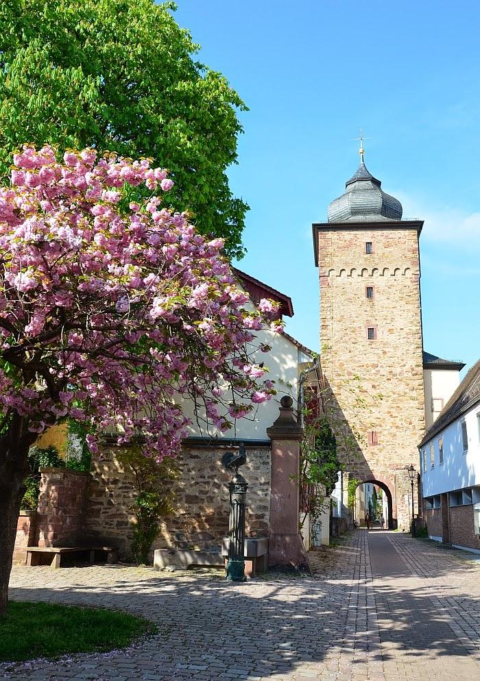 Сакура в Германии, фото, Ольга Граф