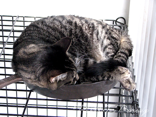 cat asleep in a cast iron fry pan
