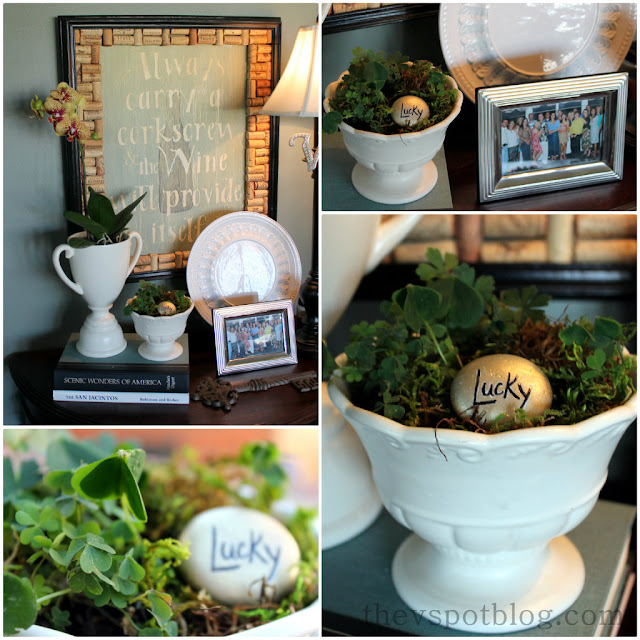 clover, shamrock, planter, lucky, st patricks day, st pattys day, white urn, orchid, silver frame