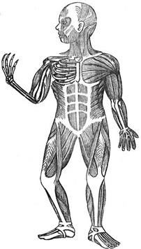 El Esqueleto Para Nios. Affordable Moda Hungry Ghost ...