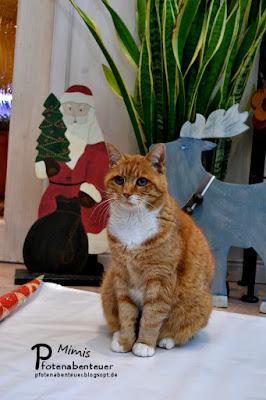 Katze Mimi wird im Rahmen eines Tutorials als Geschenk verpackt