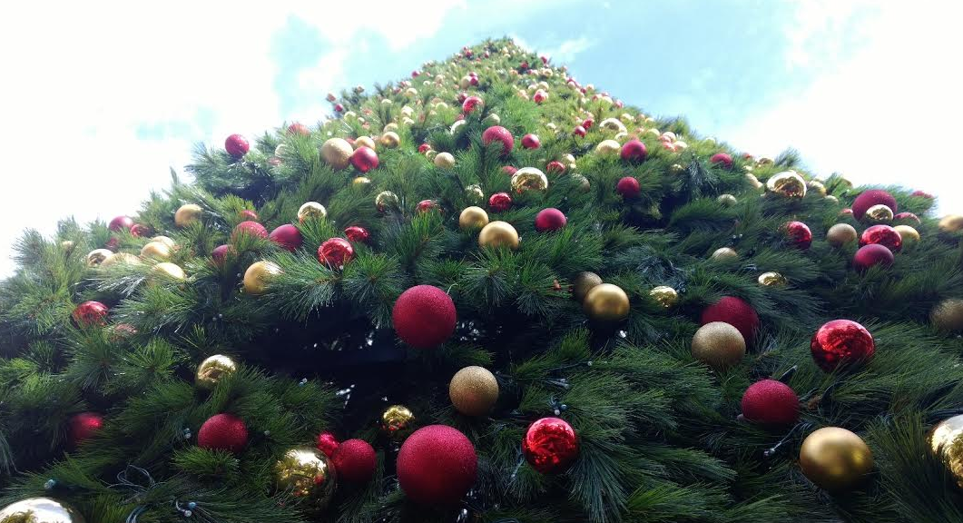 city of orlando christmas tree is up at lake eola park in