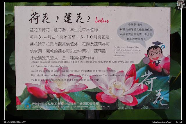 2015-05-08南投中興新村-荷花池-全面綻放了