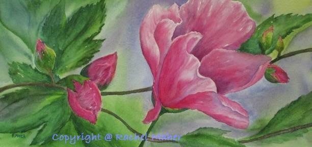 Rose de Margeaux