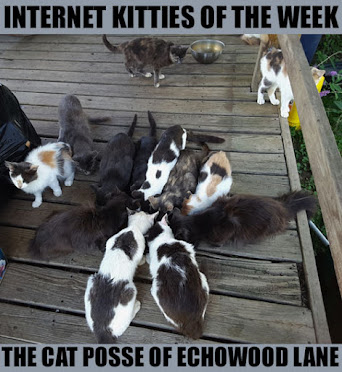 INTERNET KITTIES OF THE WEEK!