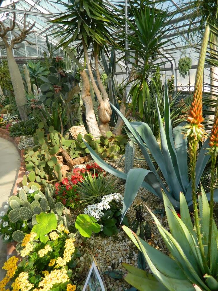 Centennial Park Conservatory desert garden by garden muses-not another Toronto gardening blog