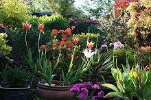Spring in Our Garden