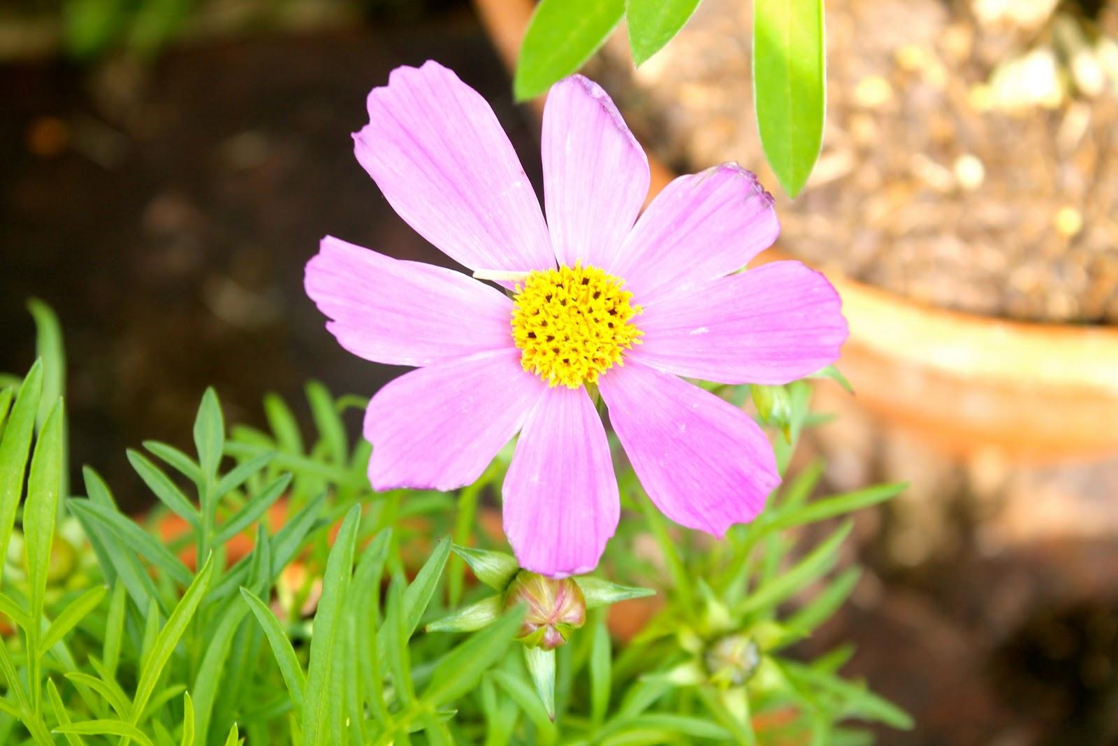 Anniversaries, Unaniversaries and Flowers!