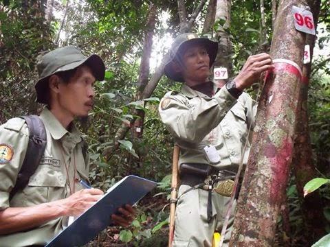 Ilmu Hutan