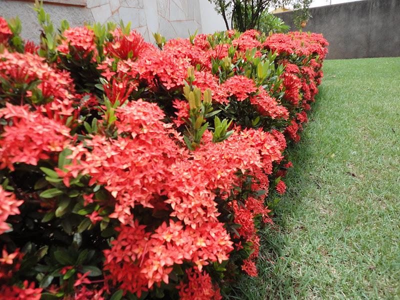 rosas do meu jardim para face