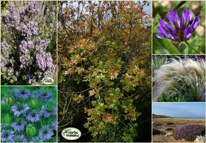 Una bordura mediterranea - Terrazzamenti giardino ...