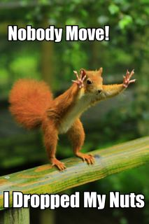 Nobody Move! - I Dropped My Nuts