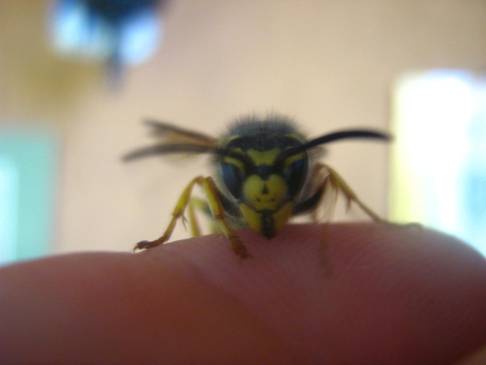 incontri foto vespa Castellammare di Stabia