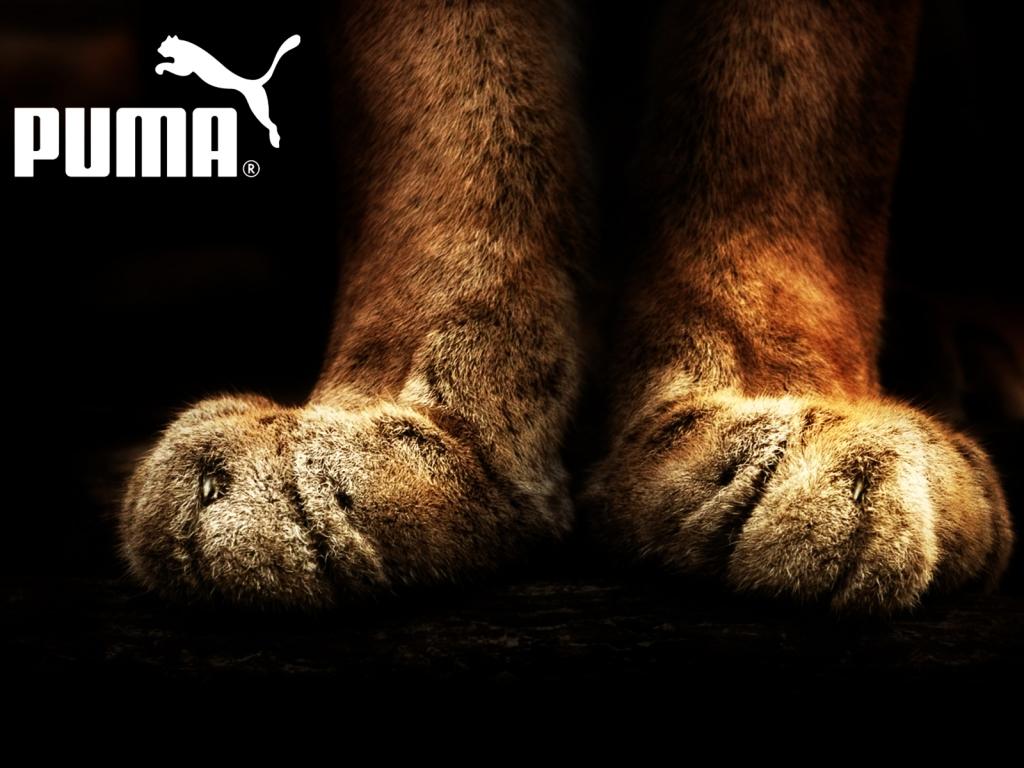 http://2.bp.blogspot.com/-LdN9t1O6cUU/T6s4L9xBPtI/AAAAAAAABpA/wI6ev5nCD50/s1600/Puma+Shoes+Wallpaper.jpeg