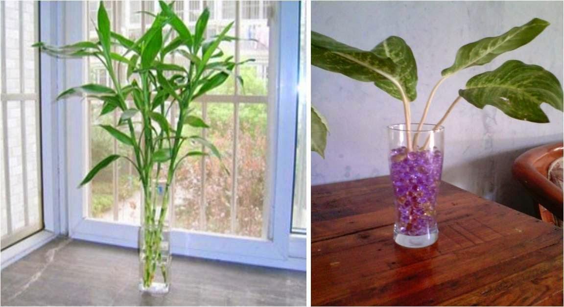 Cara Murah Menghijaukan Ruangan, Tips Membuat Ruangan Kamar Rumah Menjadi Hijau Fresh Segar dan Indah Nyaman Bersih Wangi dengan Tanaman Bunga