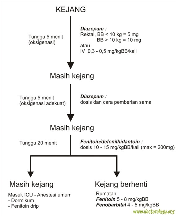 mekanisme kortikosteroid oral