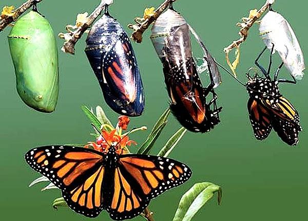Kupu-kupu, Keajaiban Metamorfosis dan Warna Warni   ZILZAAL
