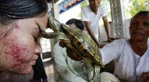 Perawatan Kulit Dengan Kura-kura