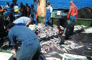 Resultado de imagen para depredación de la pesca argentina merluza