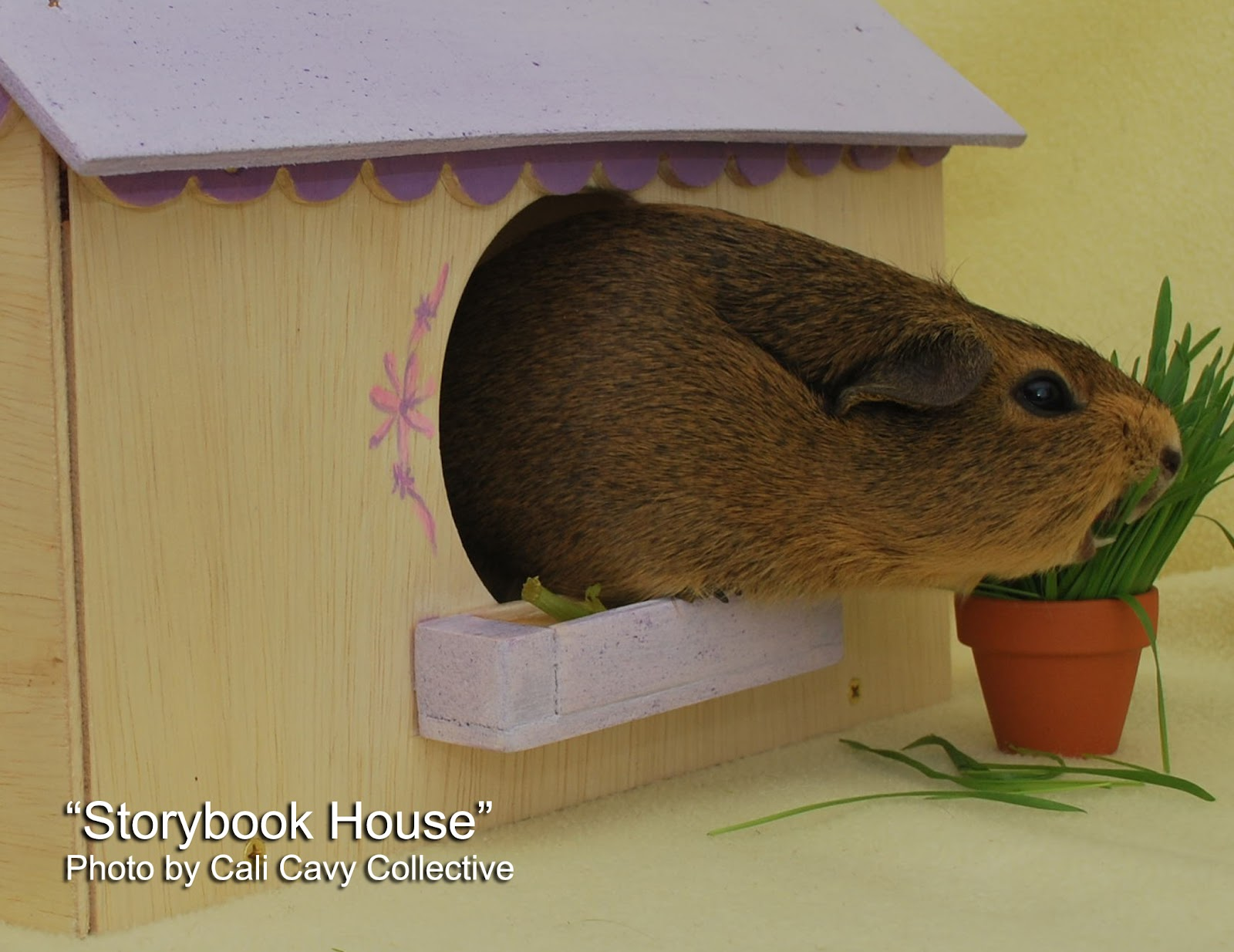 Cali cavy collective a blog about all things guinea pig for Guinea pig homes