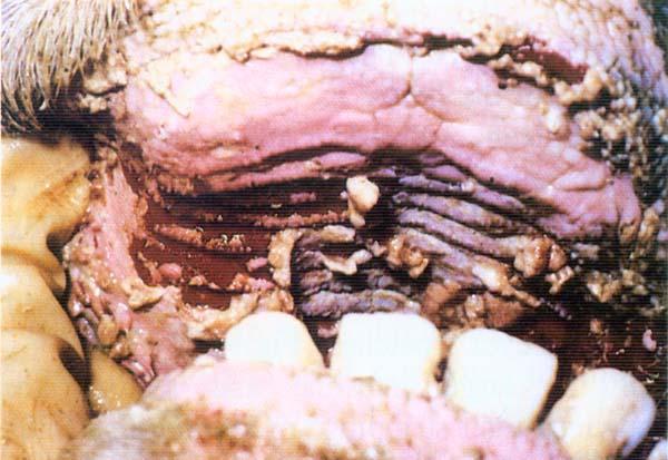 blue waffles disease cure. lue waffles disease cure. lue