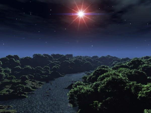 image d'une nuit étoilée dans une forêt