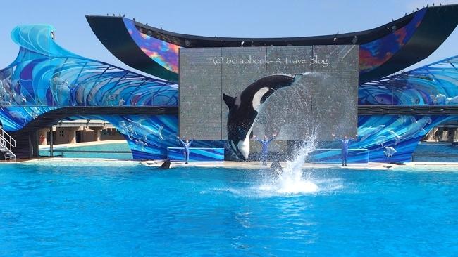 San Diego Sea World Shamu Show The Ocean
