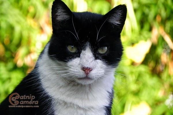Photo chat noir et blanc dans une jardin