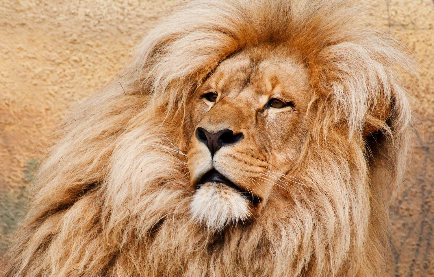 joululahjaksi rapu ja leijona