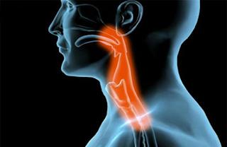 Fonoaudiologia na Disfagia Orofaríngea