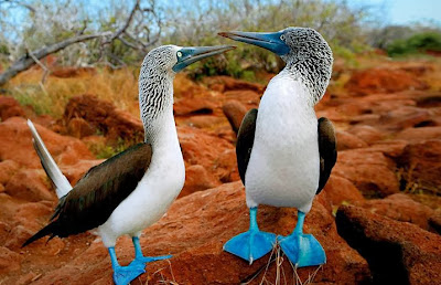 Turismo en Ecuador Isla Galapagos