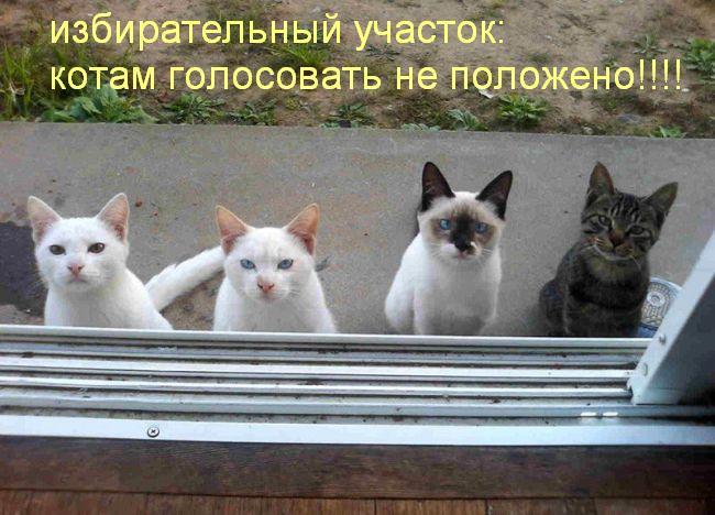 избирательный участок - котам голосовать не положено