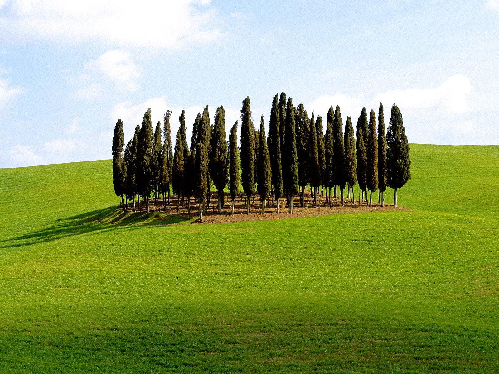 http://2.bp.blogspot.com/-LgGSgqjbhnA/Tcp4hpdh_GI/AAAAAAAACXw/z3EWE0-_S1c/s1600/Scenic+Siena+Province%252C+Tuscany%252C+Italy.jpg