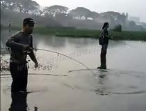 Mancing Ngarung Di Sungai Dapat Ikan Toman Besar