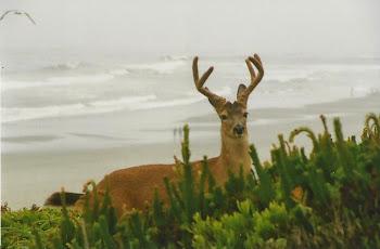 The Beach Buck