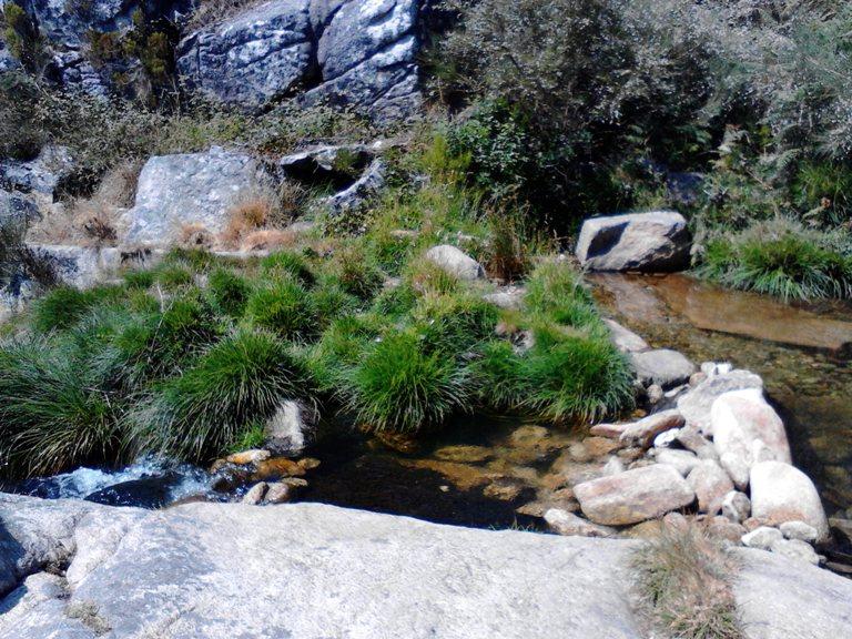 Vegetação do Rio Caima